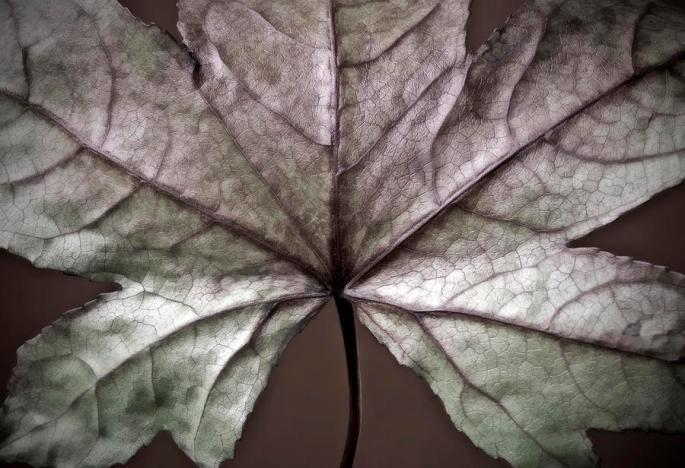 winter-leaf-nadja-drieling